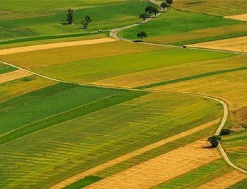როგორ უნდა მოვიპოვოთ საკუთრება მიწის ნაკვეთზე იმ შემთხვევაში თუ არ გაგვაჩნია საკუთრების უფლების დამდგენი დოკუმენტი